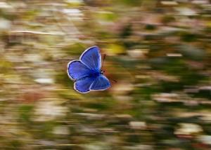 butterfly-2837589_1920